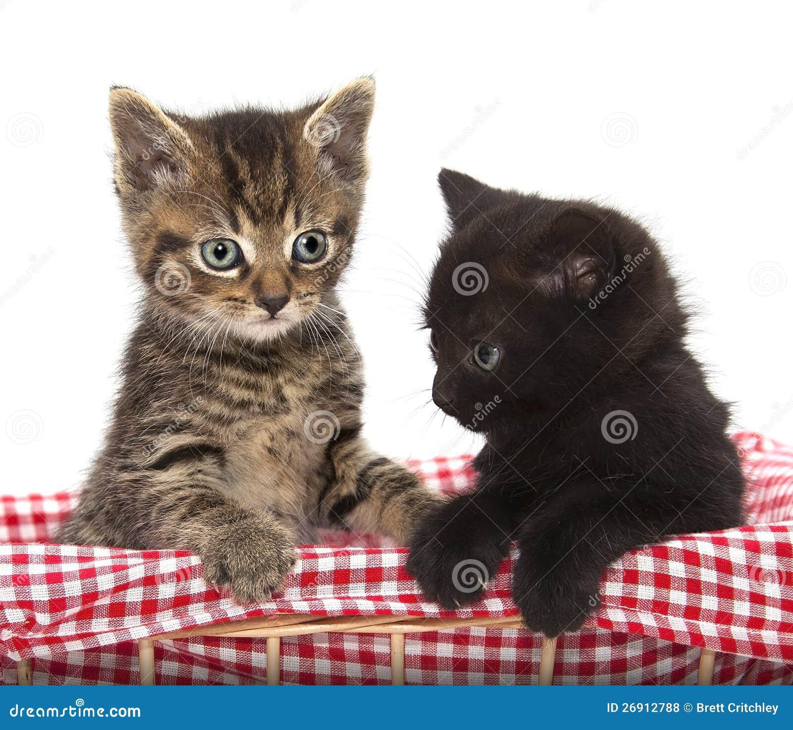 逗人喜爱的黑色和平纹小猫