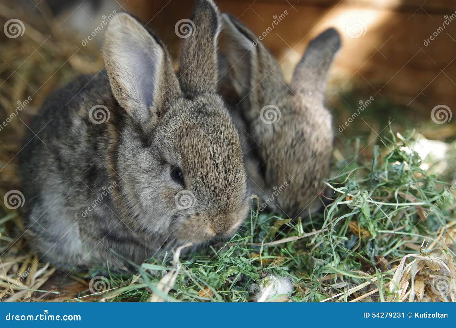 逗人喜爱的婴孩兔宝宝