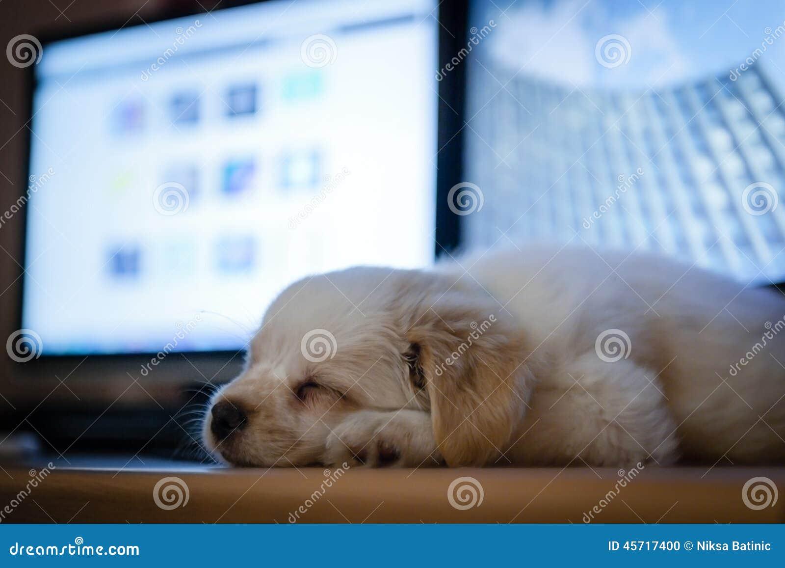 逗人喜爱的puppie睡眠