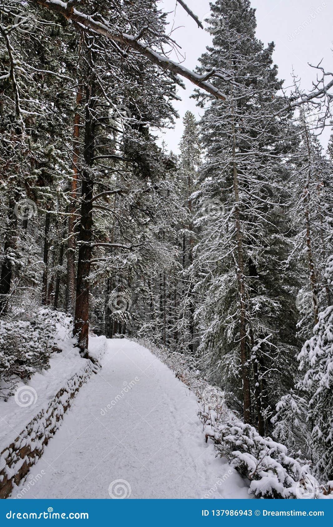 通往森林的道路-幽鹤国家公园