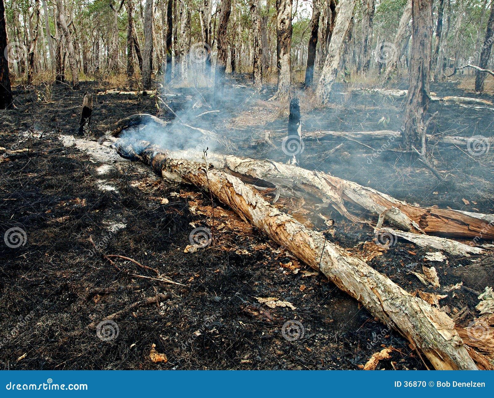 通配灌木的火