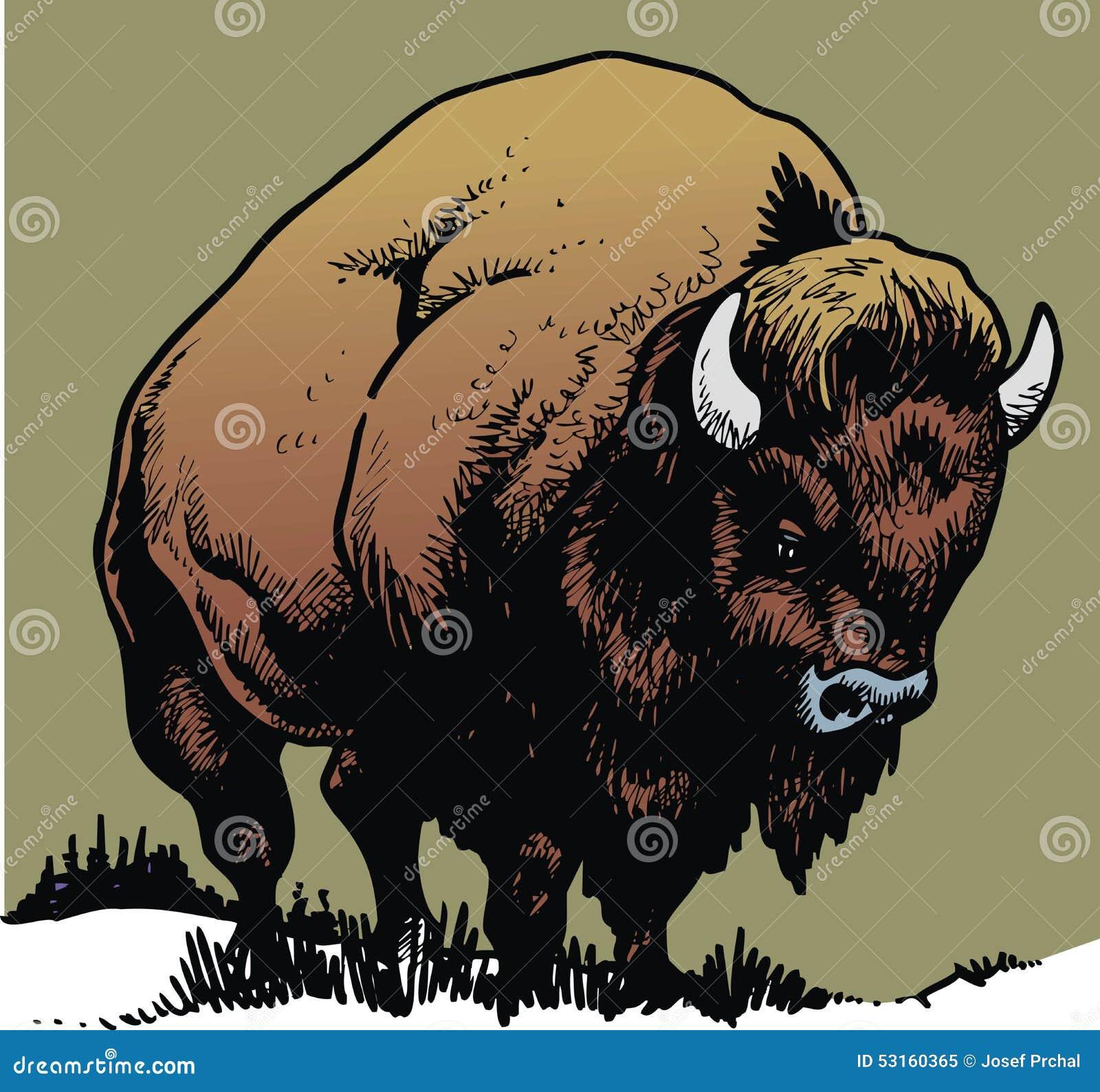 通配的公牛