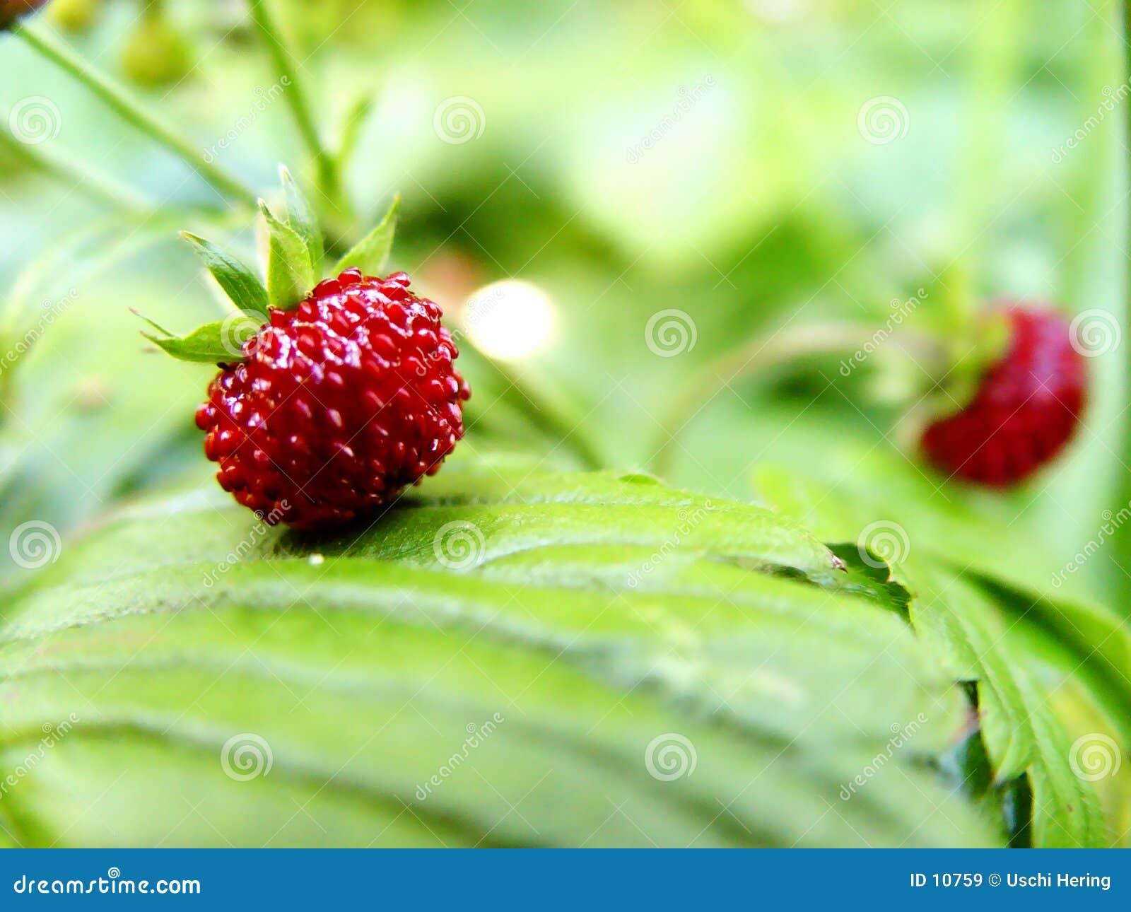 通配的草莓