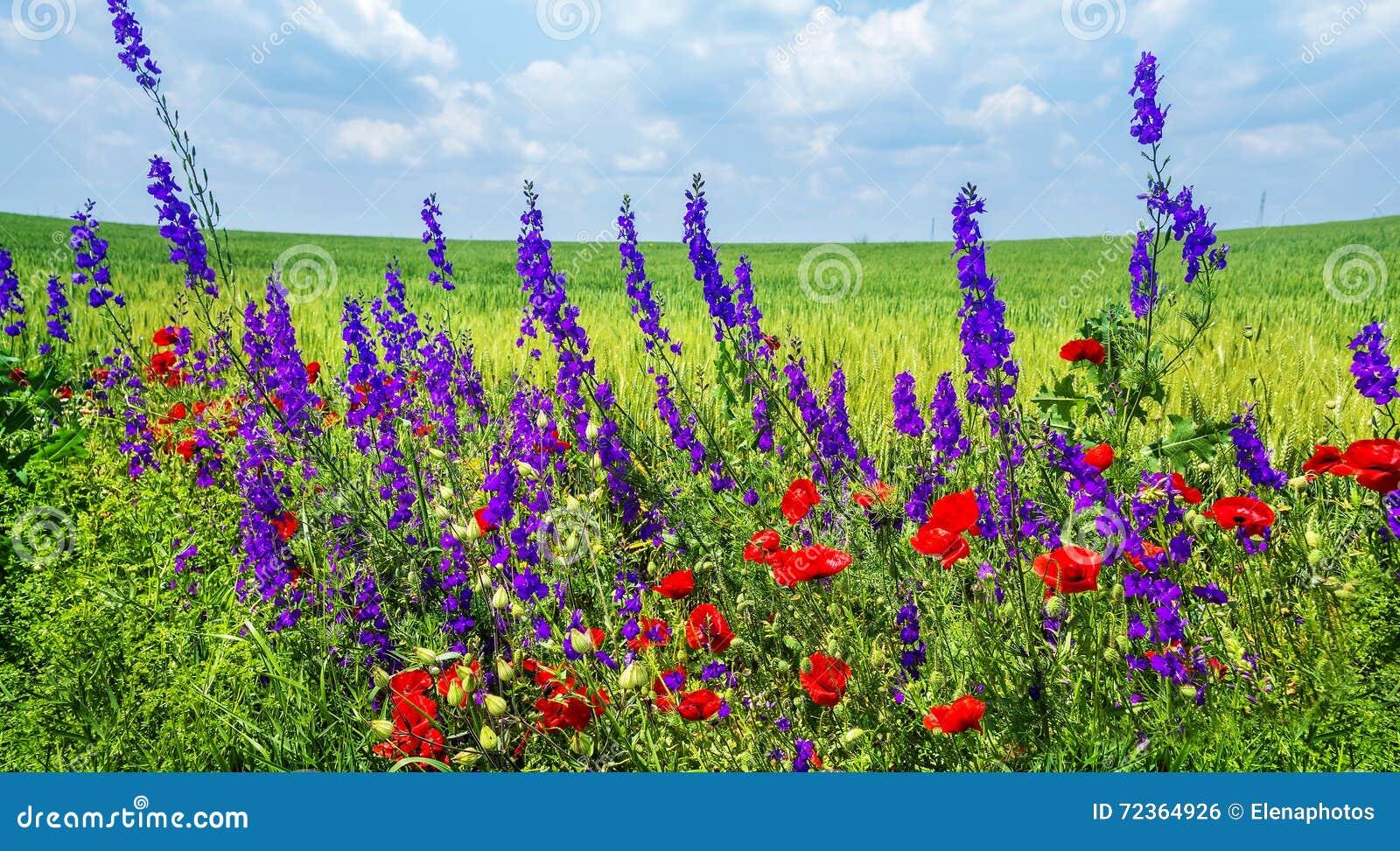 通配美丽的花