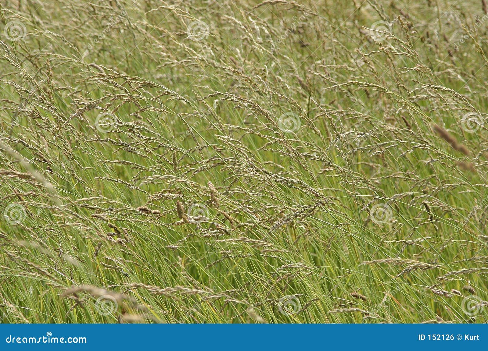 通配背景的草