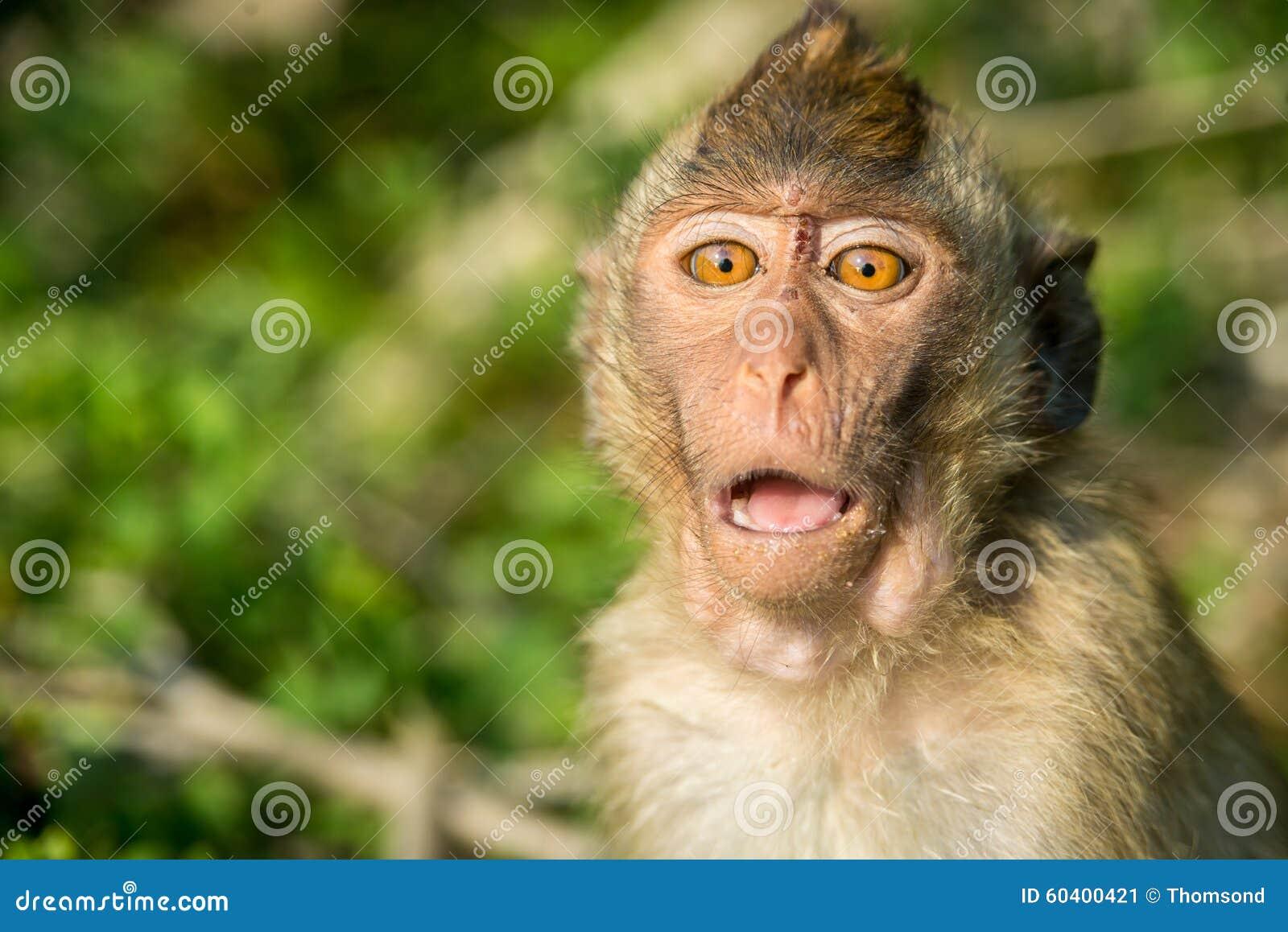 通配猴子的纵向