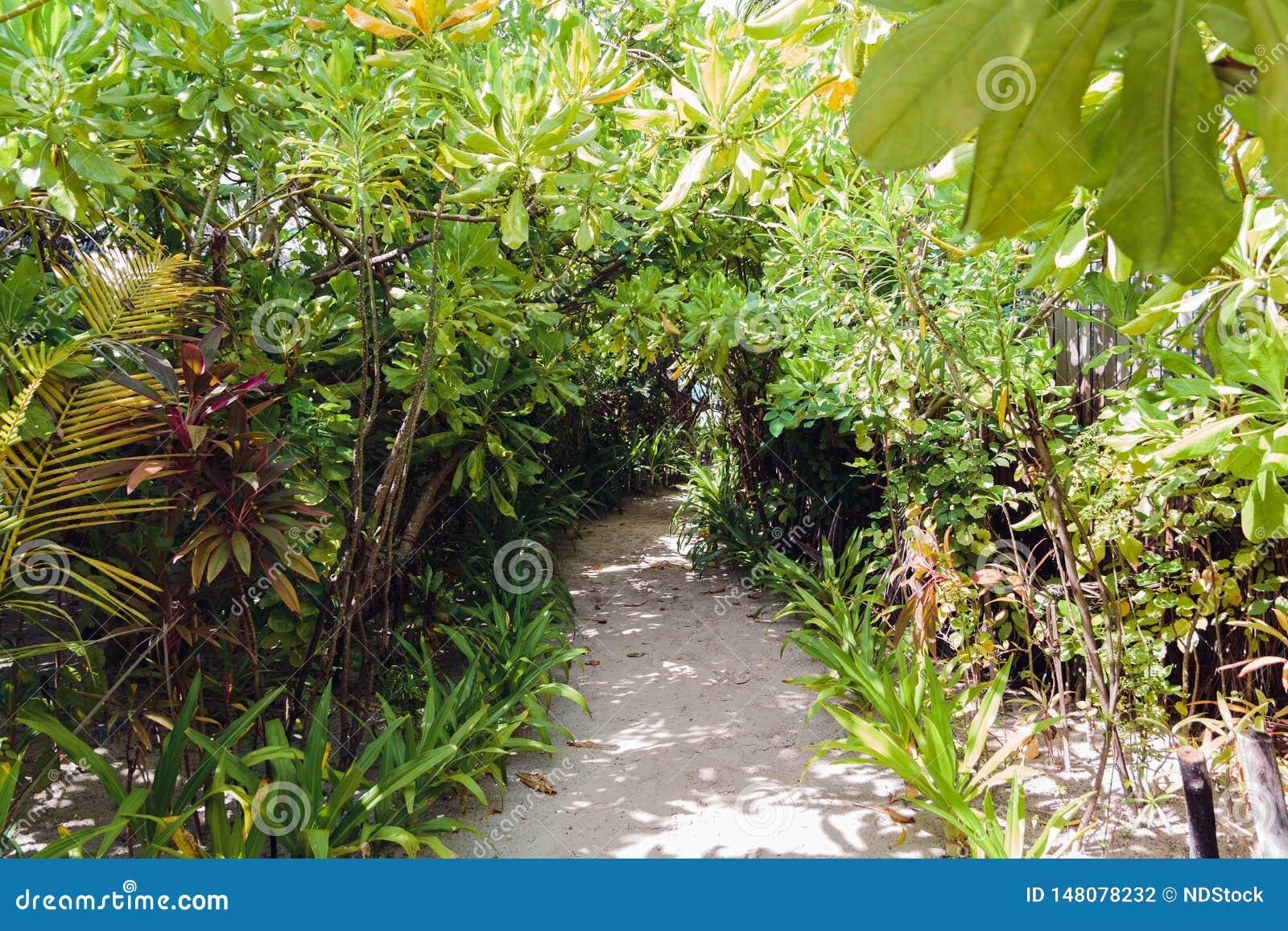 道路在一个马尔代夫海岛上的森林里