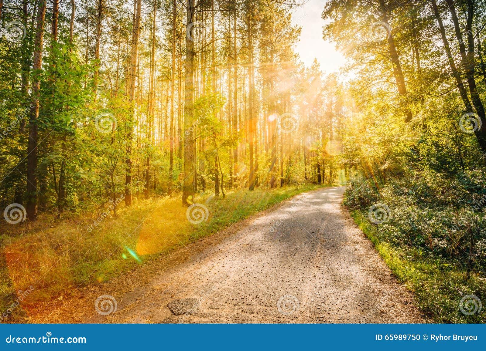 道路路线路在日落或太阳的夏天晴朗的森林里图片