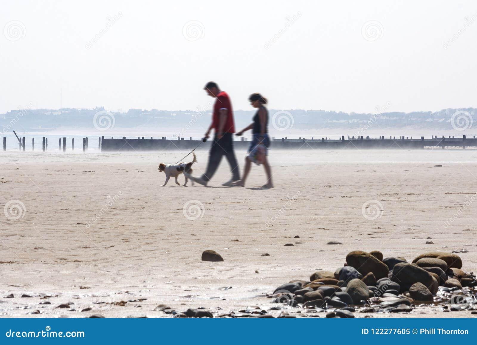 遛的夫妇在海滩的狗
