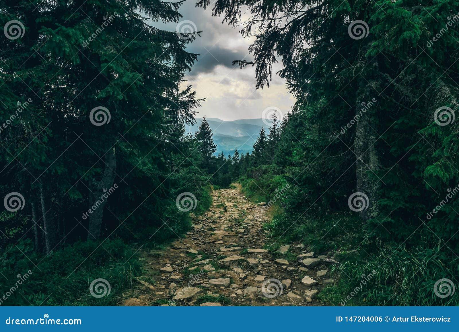 遮荫路通过小山