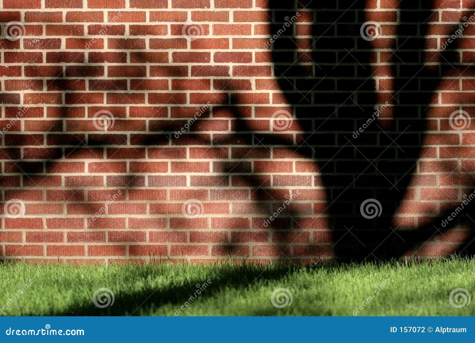 遮蔽结构树墙壁