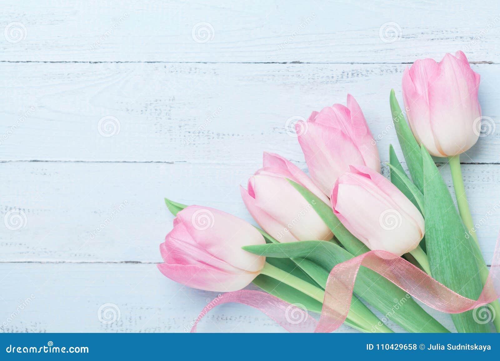 郁金香为妇女或母亲节开花在蓝色桌上的装饰的丝带 美好的看板卡春天 顶视图