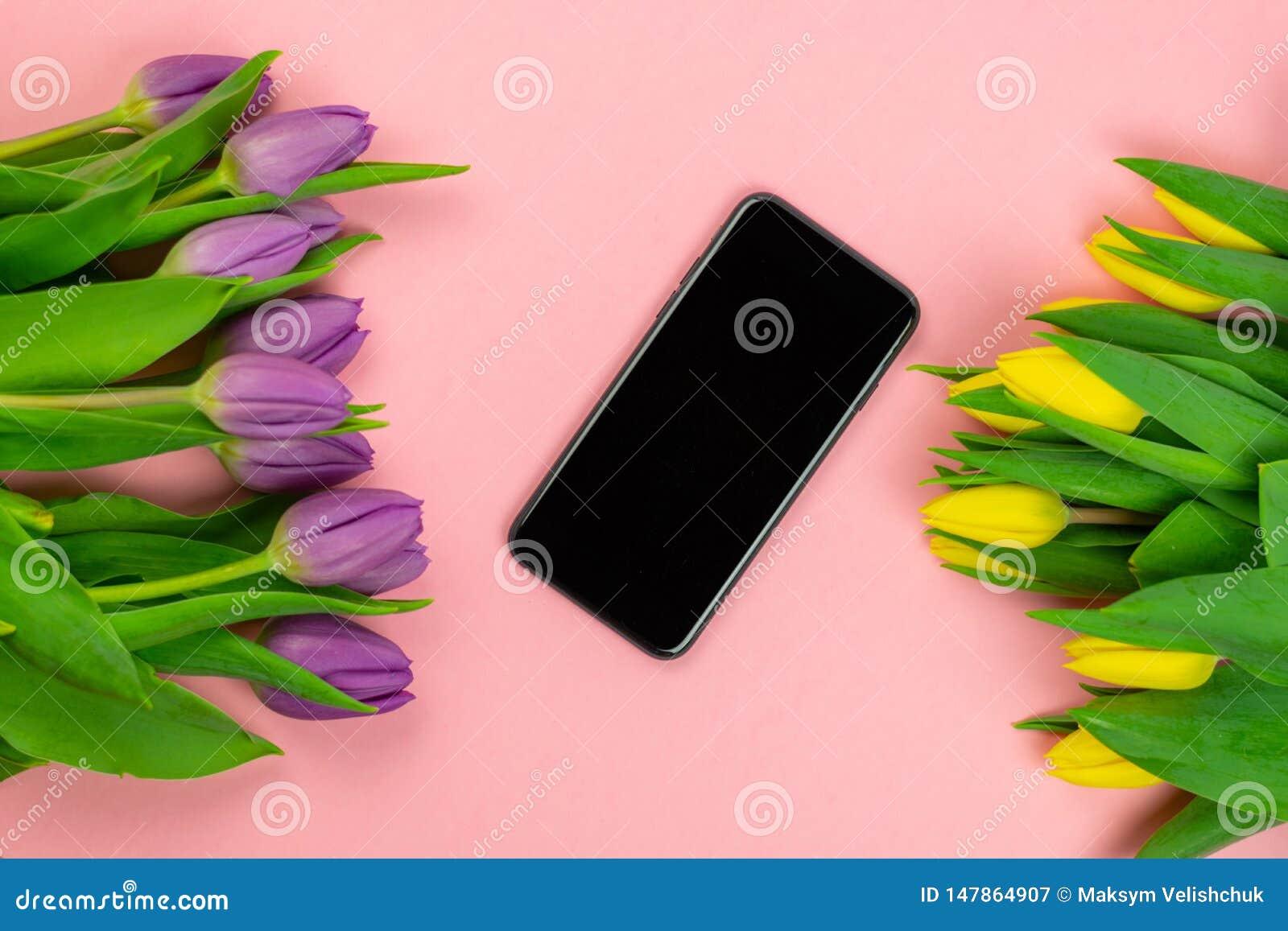 郁金香和片剂有白色大模型屏幕的在桃红色背景 贺卡为复活节或妇女的天