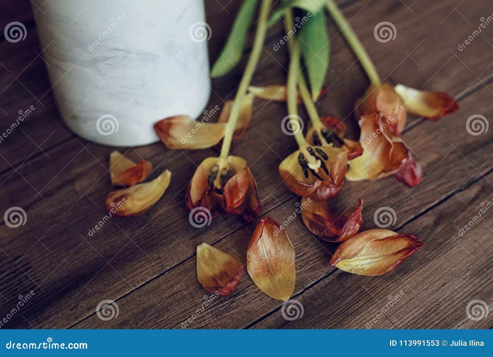 郁金香花木桌背景