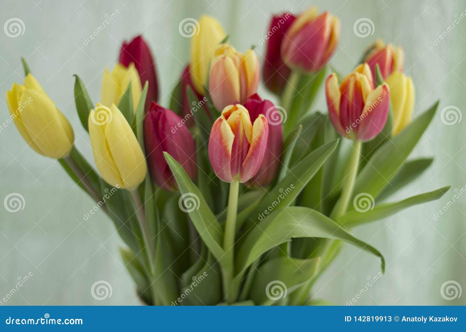 郁金香花束在轻的背景的