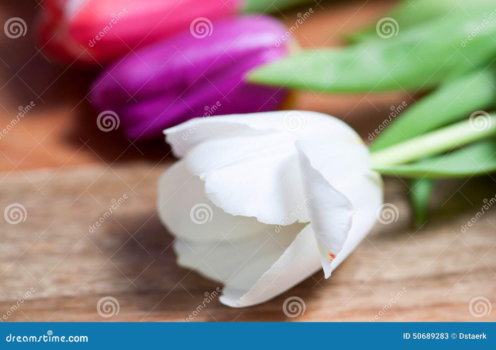 Download 郁金香 库存图片. 图片 包括有 beauvoir, 晴朗, 装饰, 郁金香, 母亲, 复活节, 消息, 花卉 - 50689283