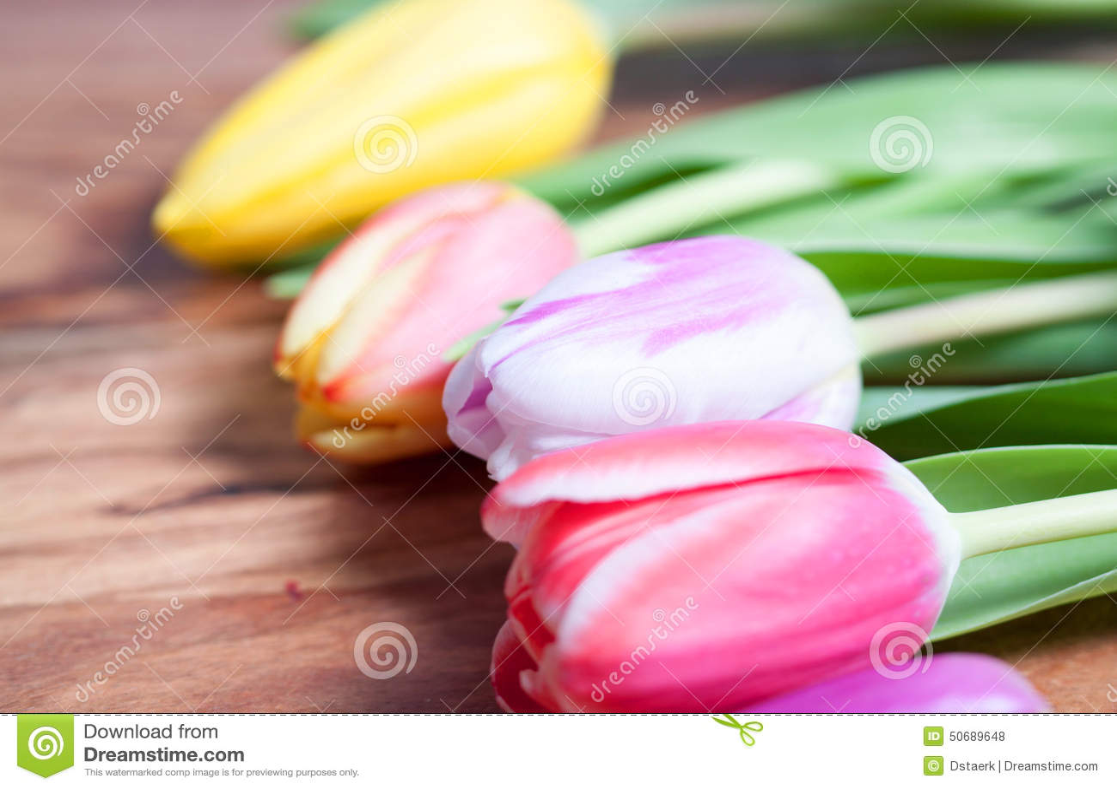 Download 郁金香 库存照片. 图片 包括有 生日, 装饰, 消息, 季节性, 背包, 木头, beauvoir, 开花 - 50689648