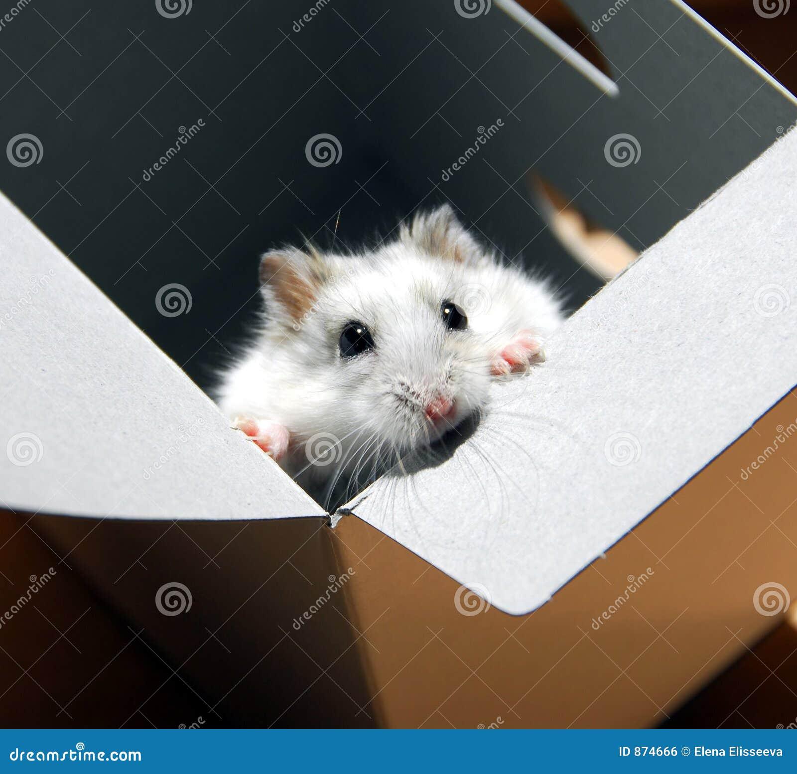 配件箱仓鼠
