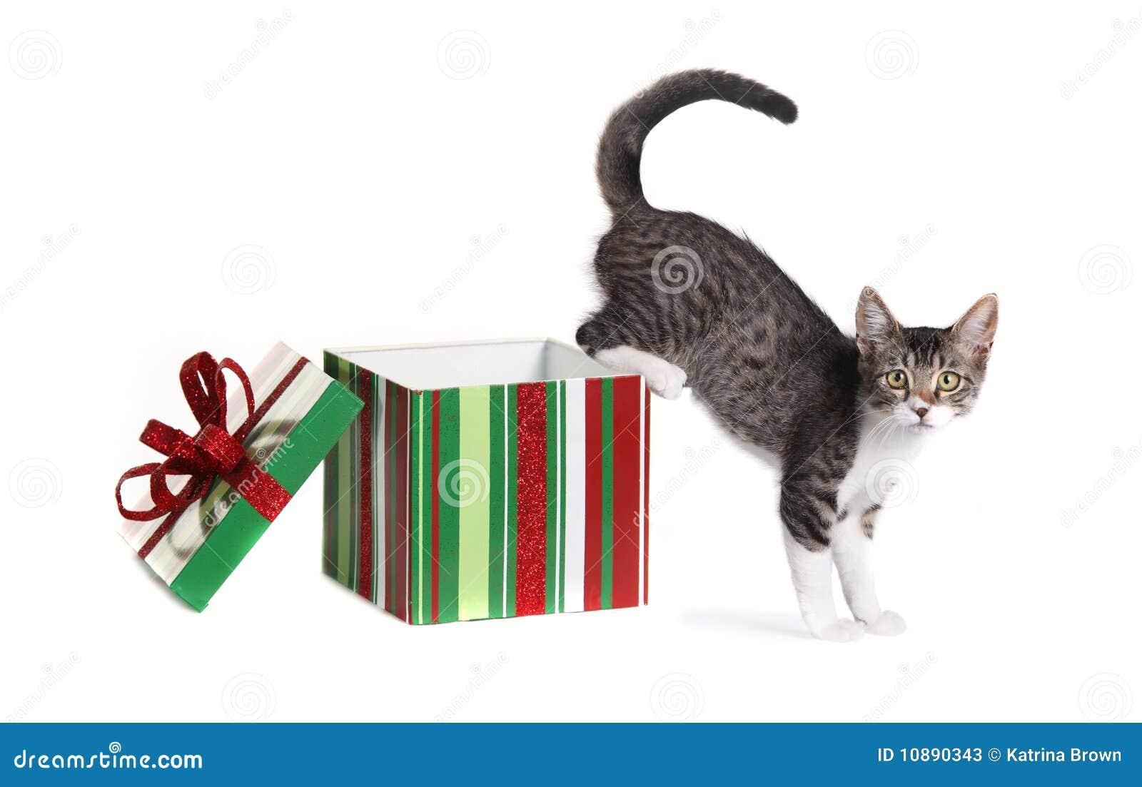 配件箱圣诞节礼品全部赌注