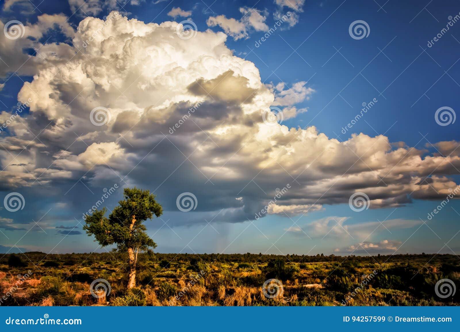 酿造在澳洲内地澳大利亚的风暴