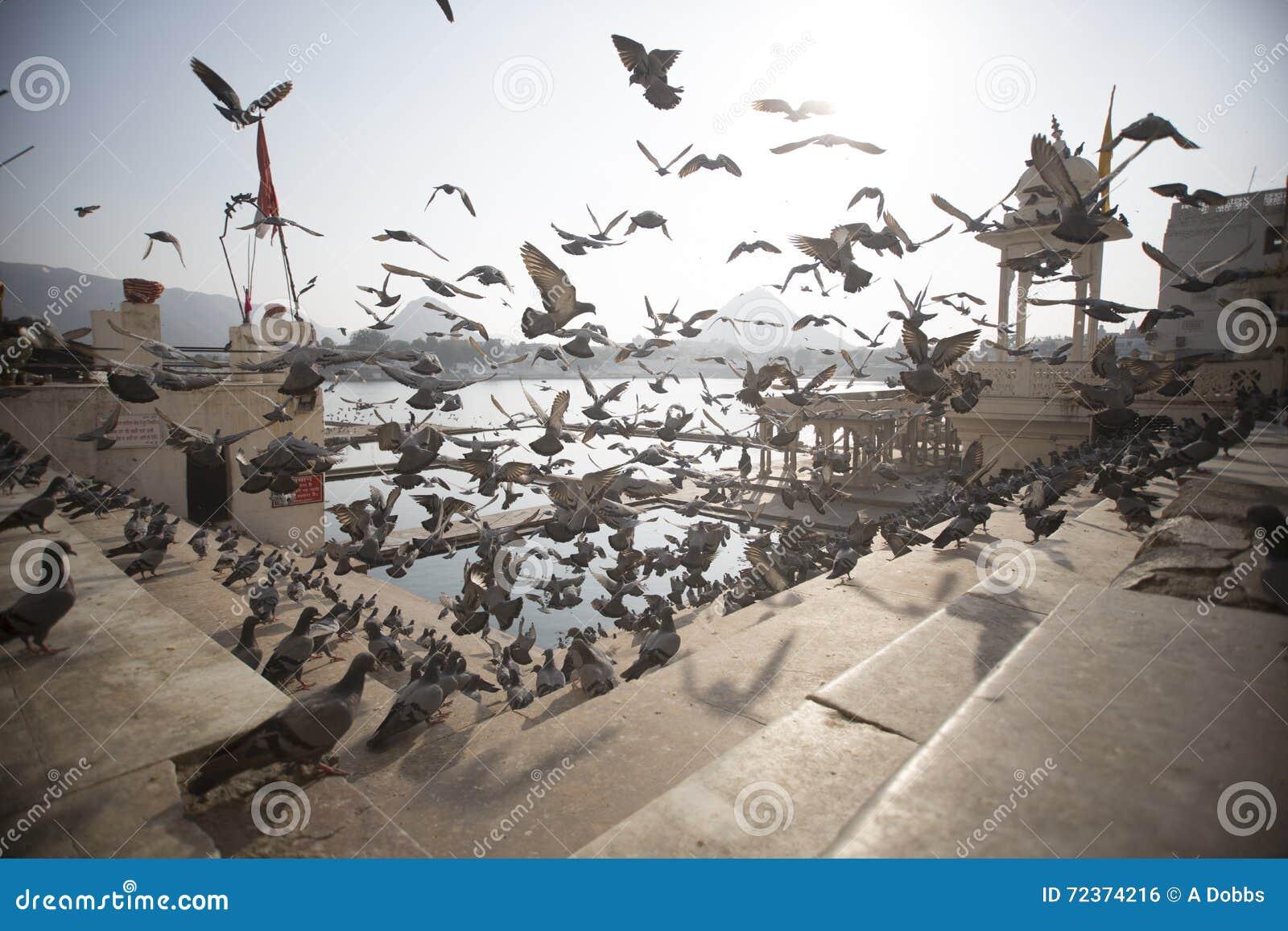 采取在寺庙步的鸽子飞行