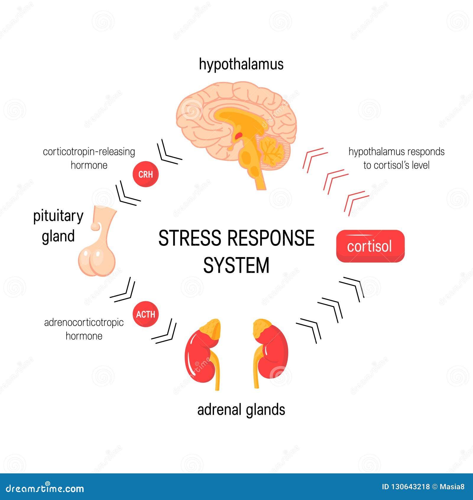 重音反应系统 传染媒介内分泌医疗图
