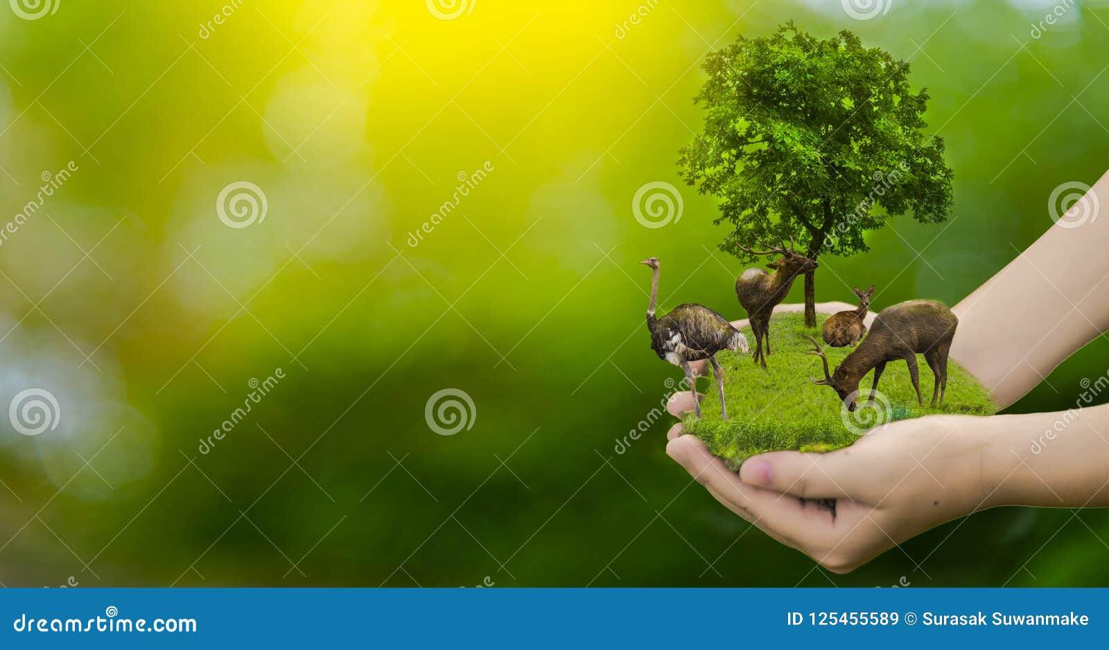 野生生物保护鹿,驼鸟,全球性变暖,寂寞,生态,人的手,在手,锂上能保护野生生物,树