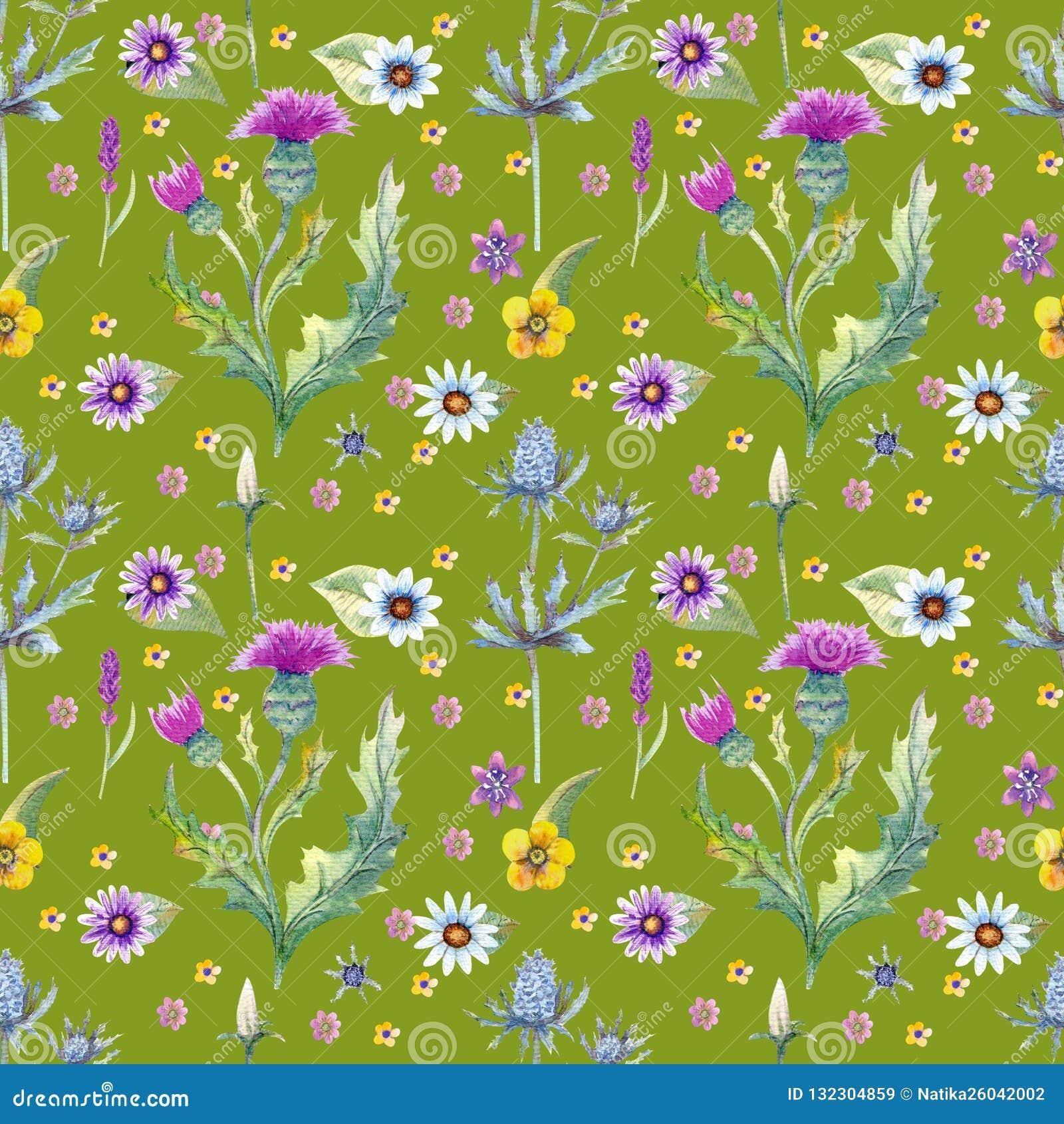 野花背景 无缝的模式 野花背景水彩