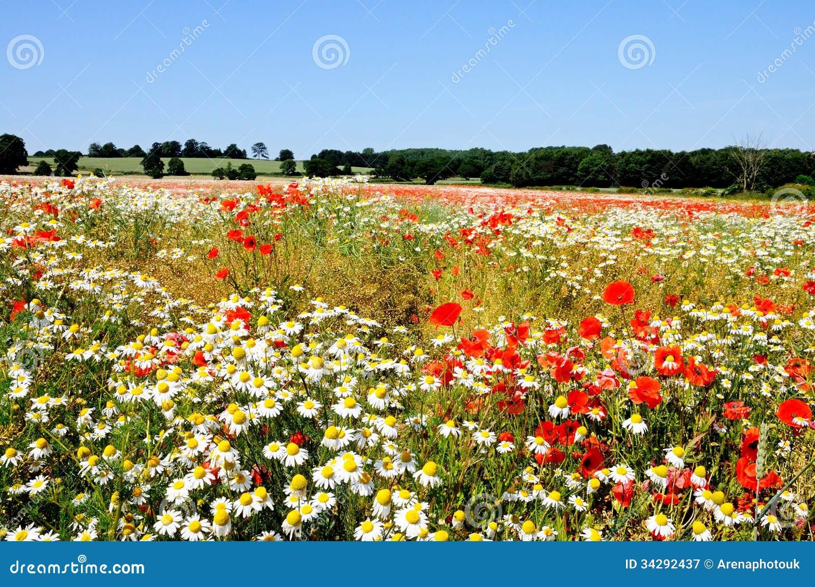 野花领域, Lichfield,英国。