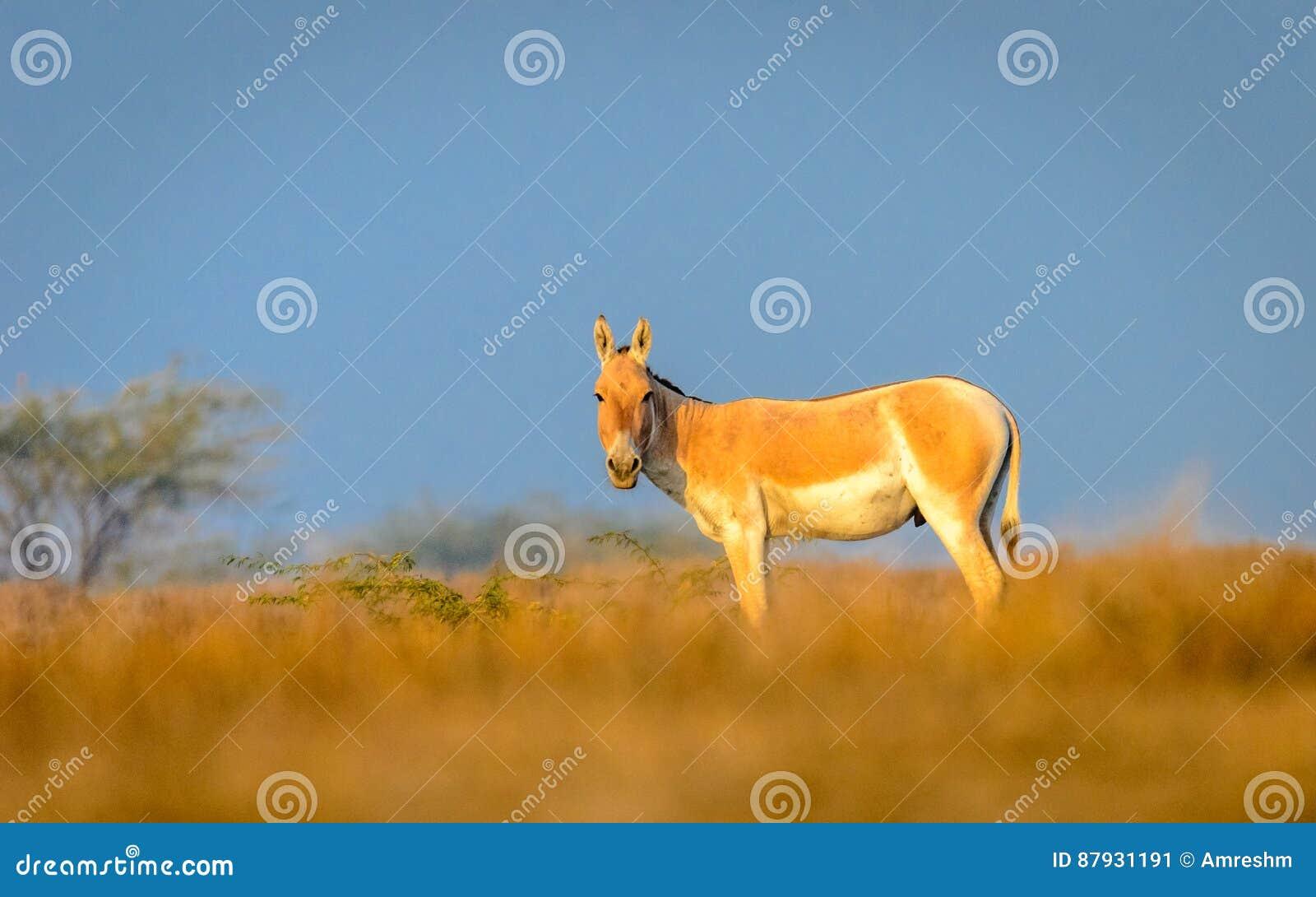 野驴有美好的背景