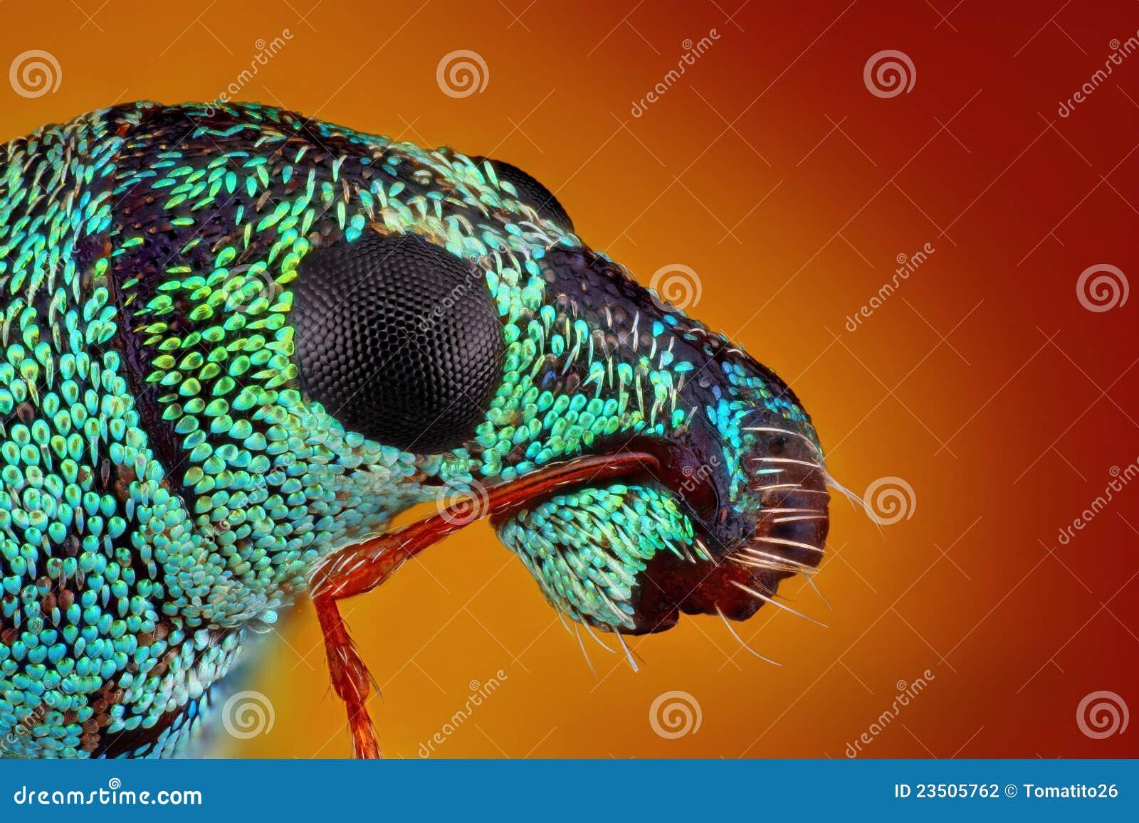 金属象鼻虫的极其锋利和详细研究