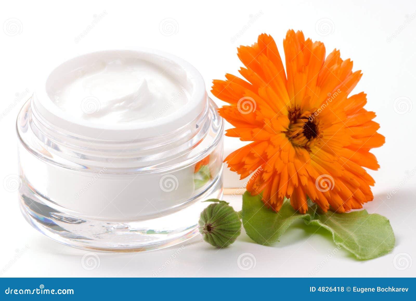 金盏草奶油色表面花