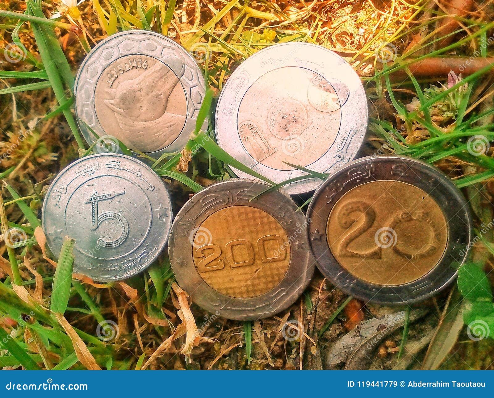 金钱阿尔及利亚人