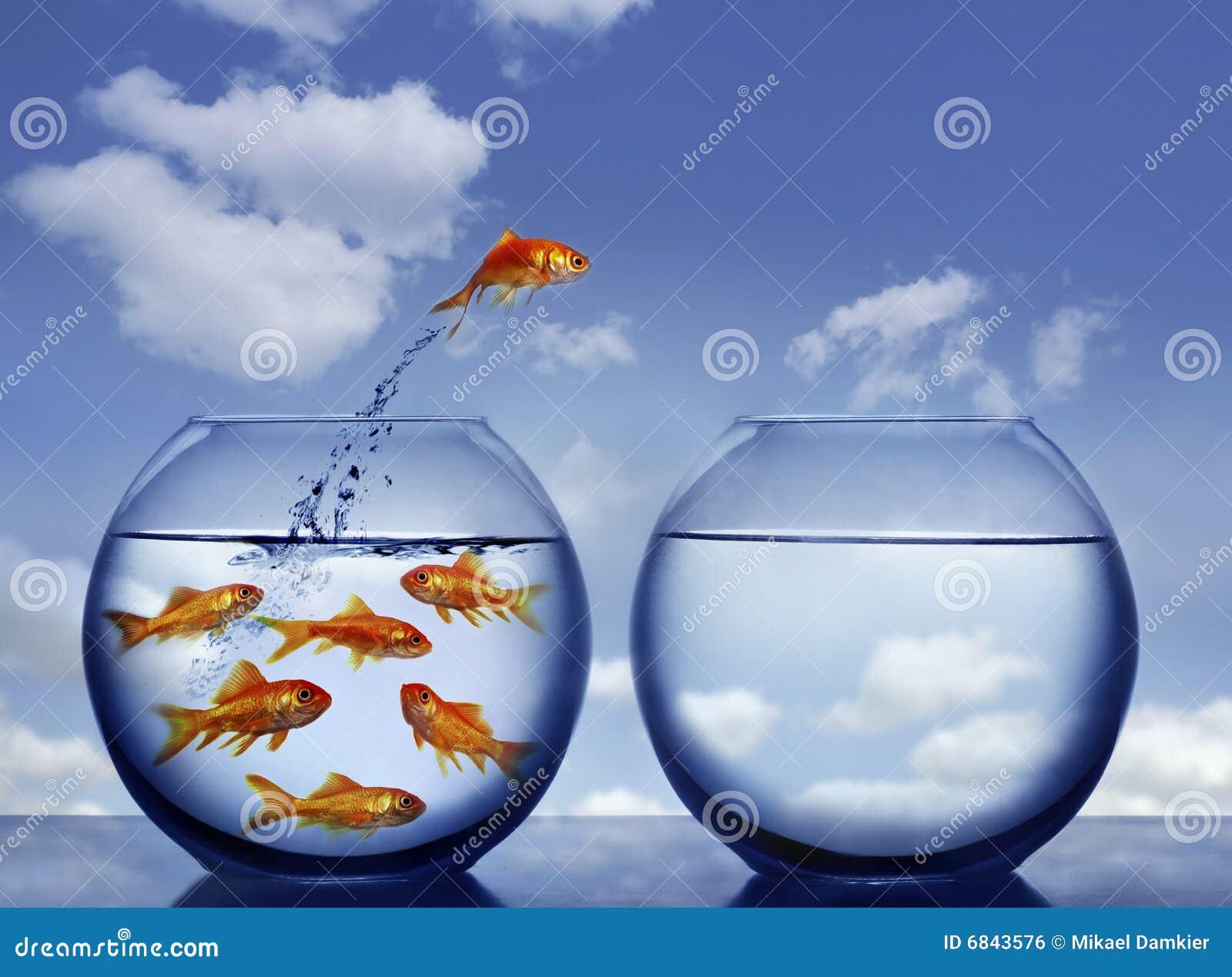 金鱼跳出的水