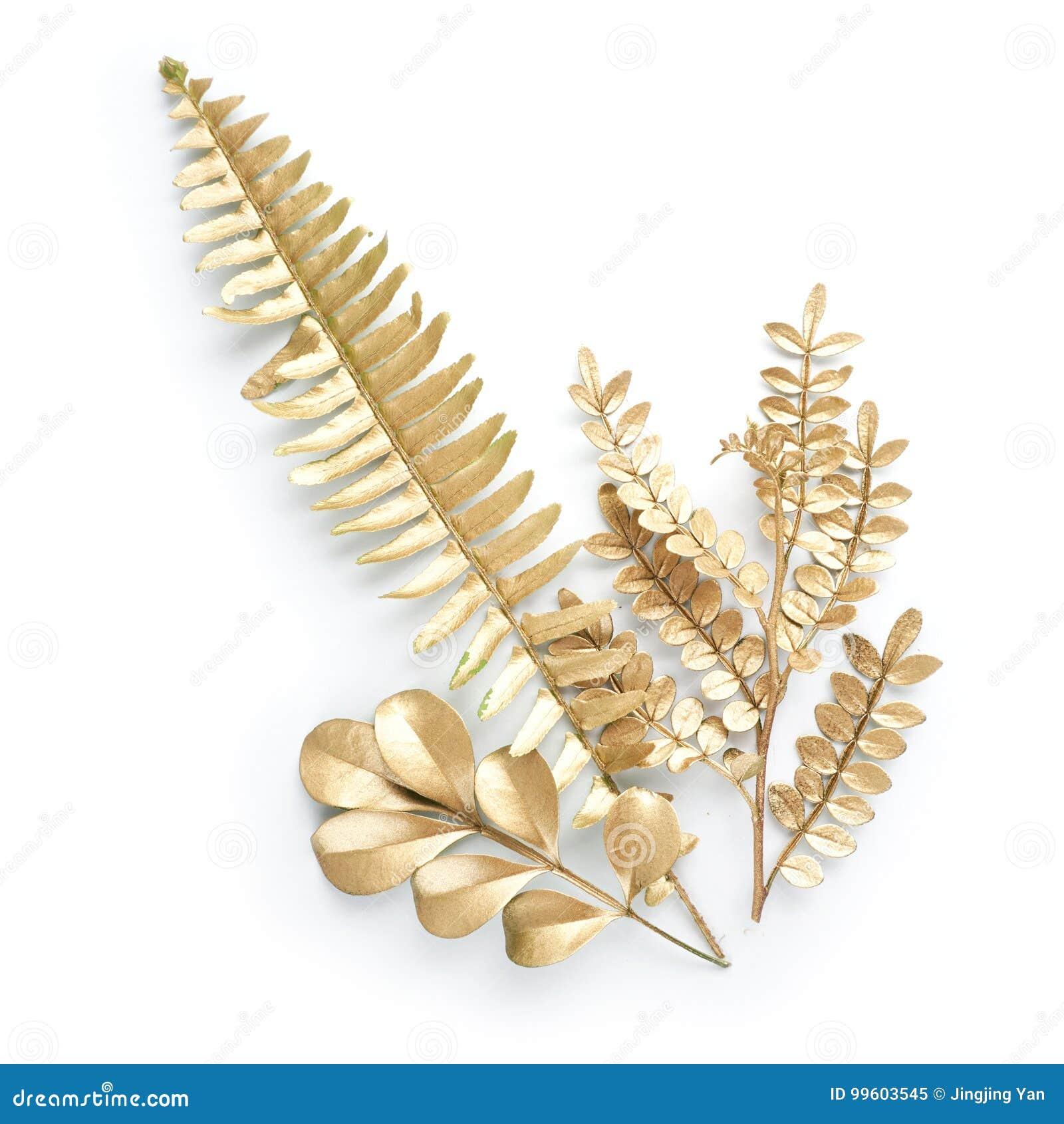 金黄叶子设计元素 邀请的装饰元素,喜帖,情人节,贺卡 查出在白色