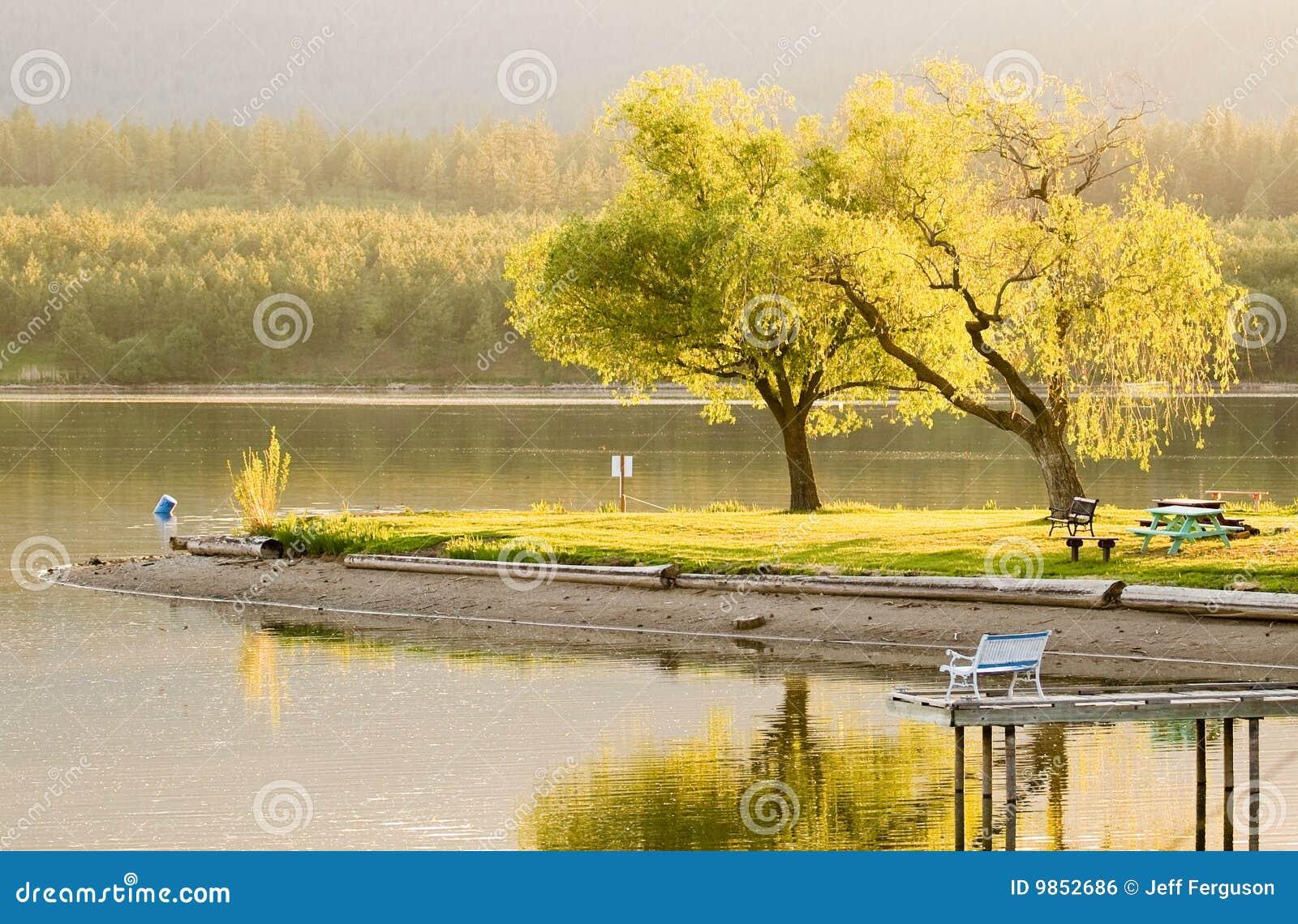 金黄时数湖平静春天