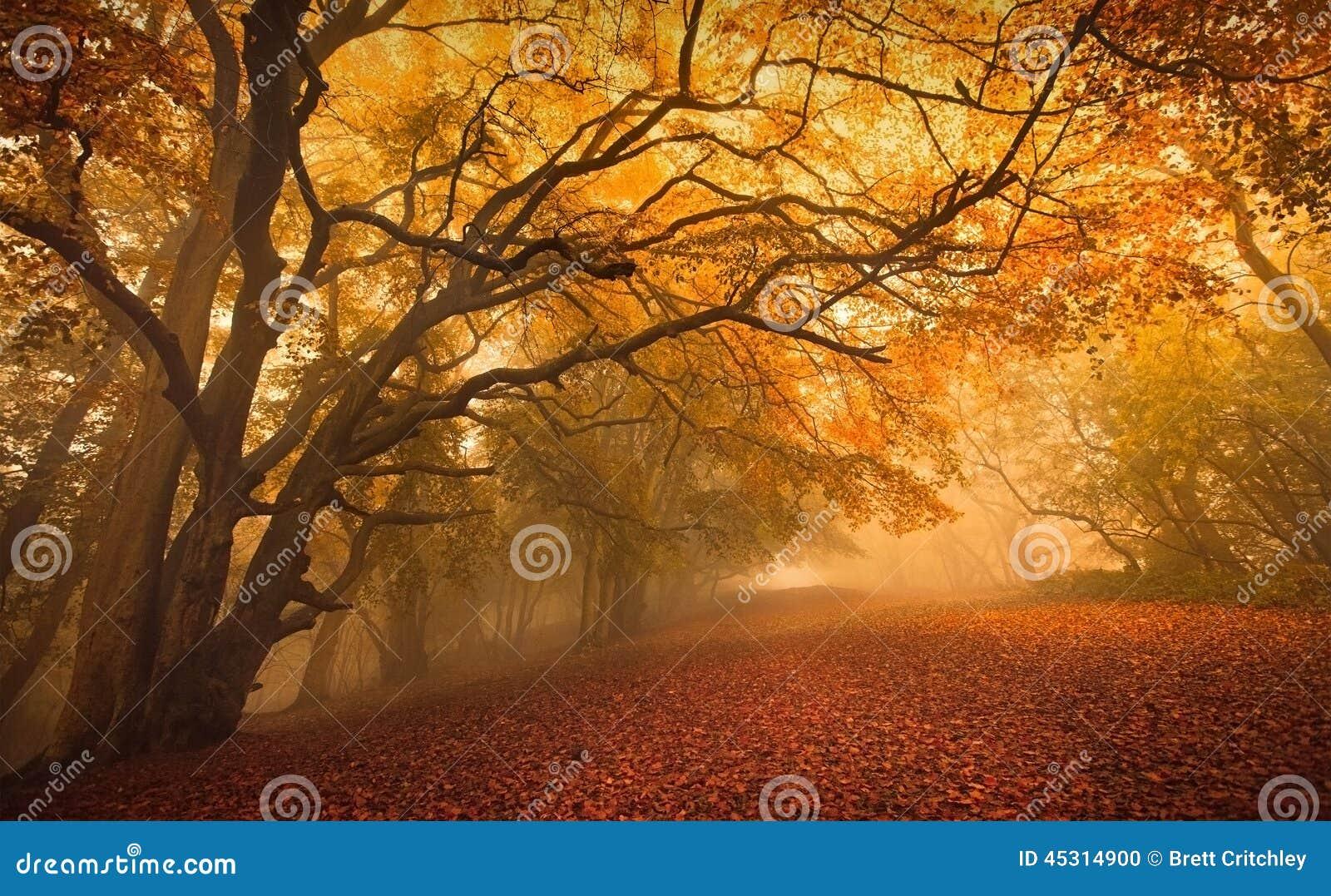 金黄秋季森林