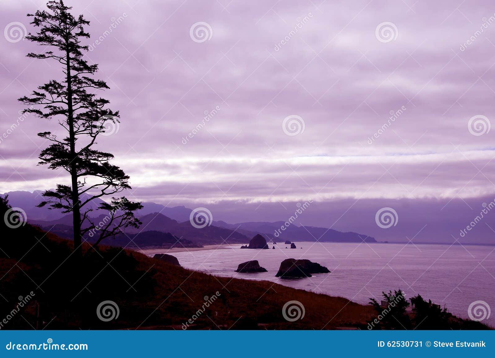 针叶树剪影反对海岸的