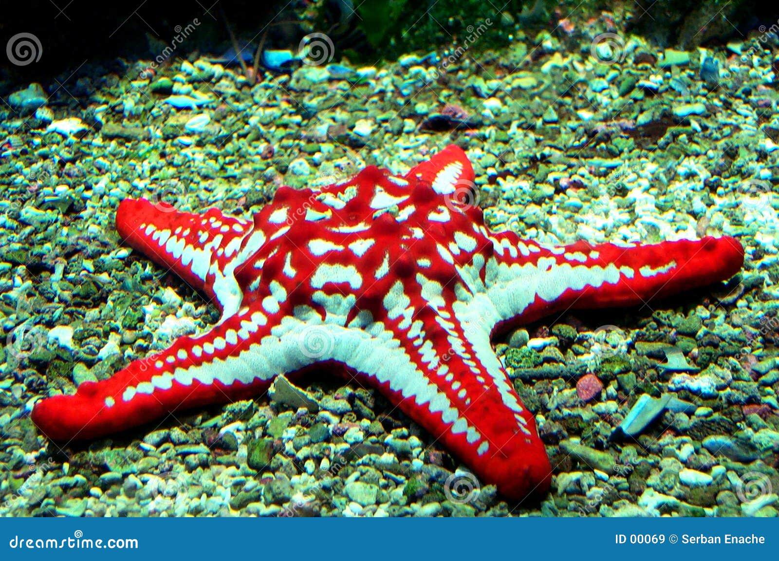 钓鱼红色星形