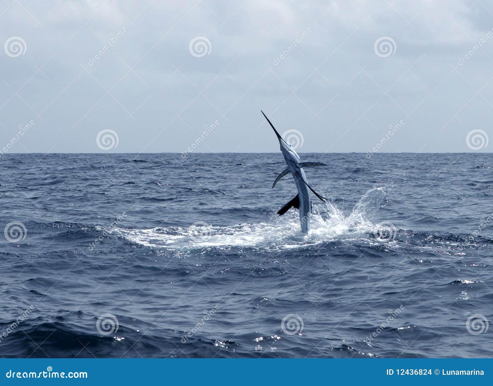 钓鱼跳的旗鱼盐水体育运动