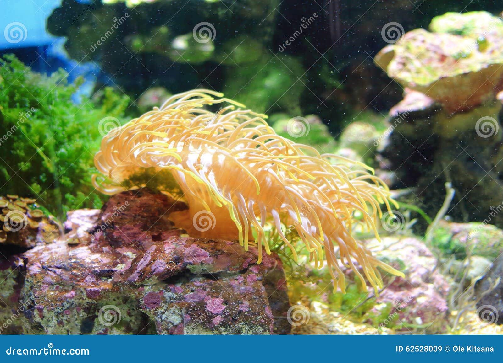 银莲花属水族馆没有被采取的海运通配