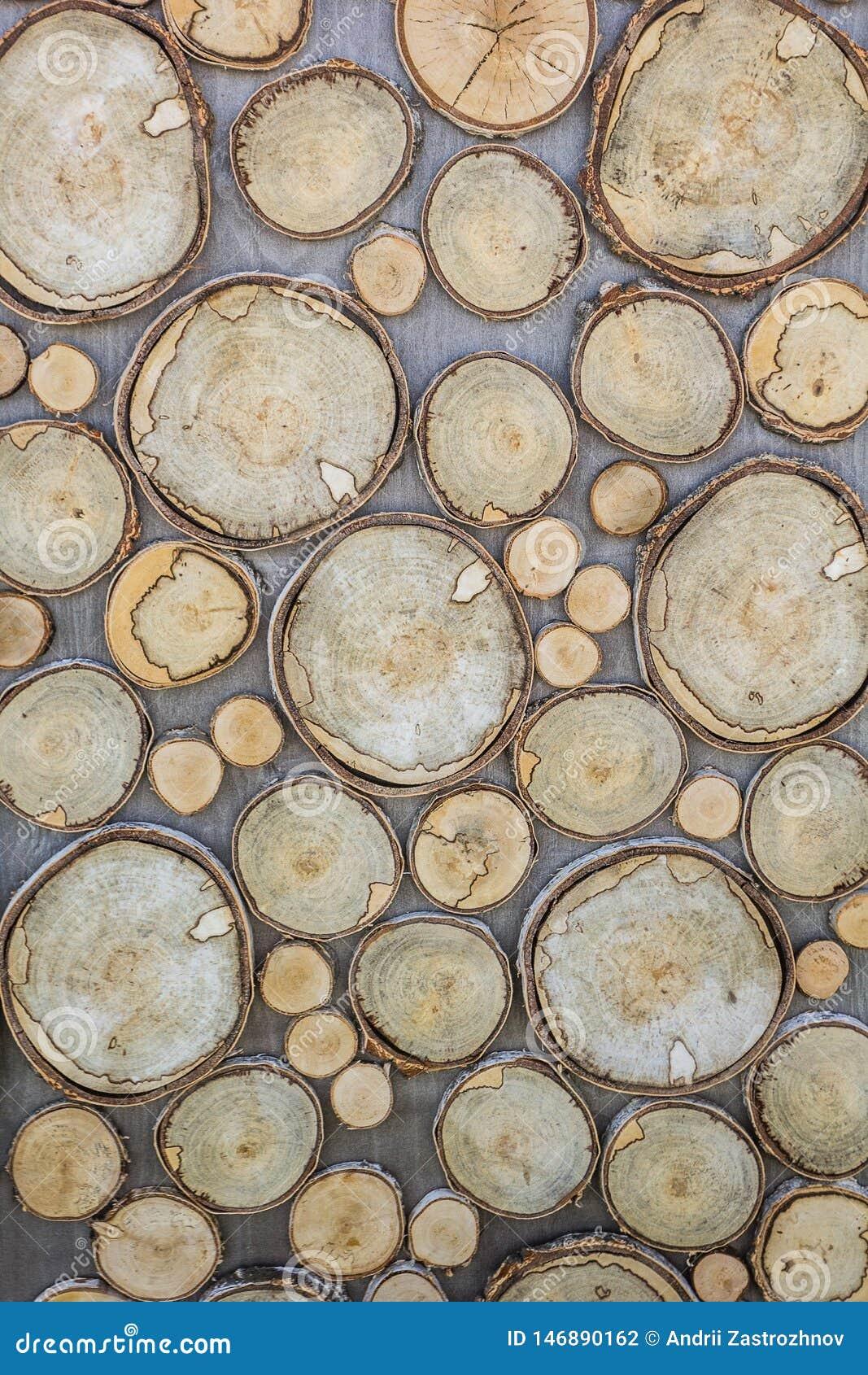 镇压,年轮,木头吠声纹理,圆形,从一棵大和小树被雕刻 垂直的背景和