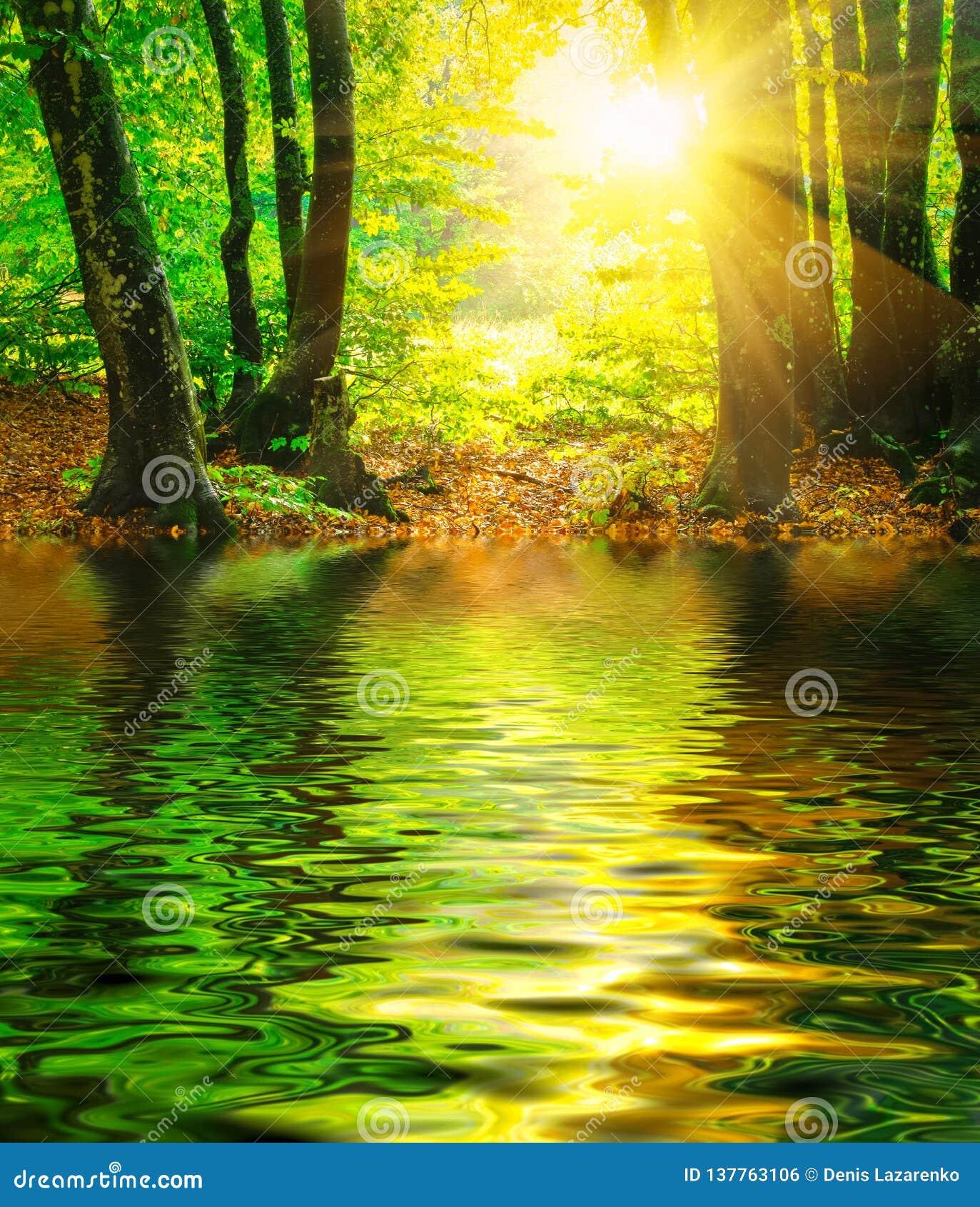 镇静河,太阳光芒在晴朗的春天森林里