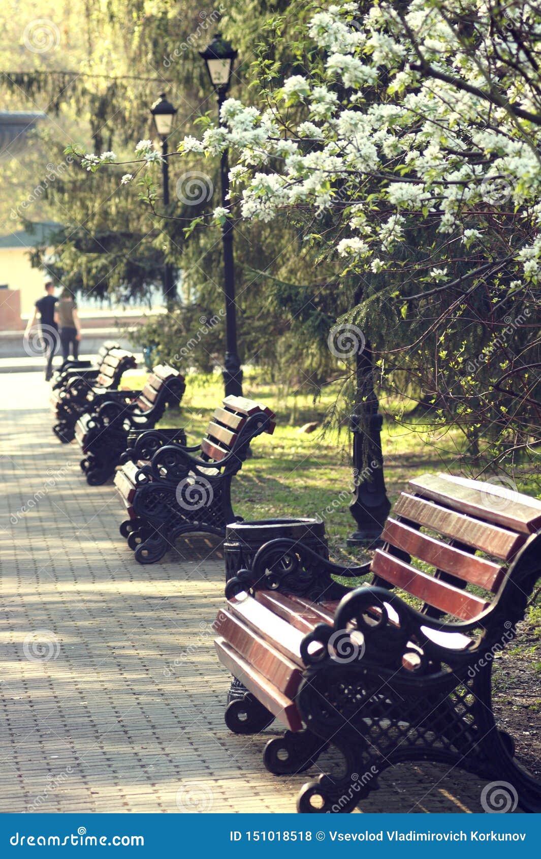 长凳在第八的公园3月街道在叶卡捷琳堡在一个早期的晴朗的早晨