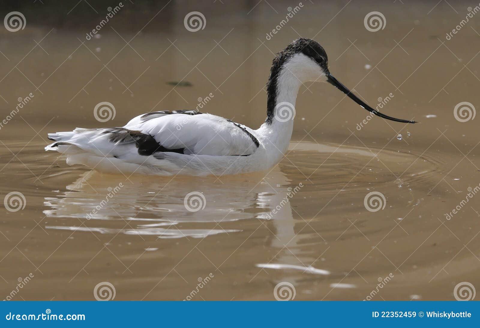 长嘴上弯的长脚鸟
