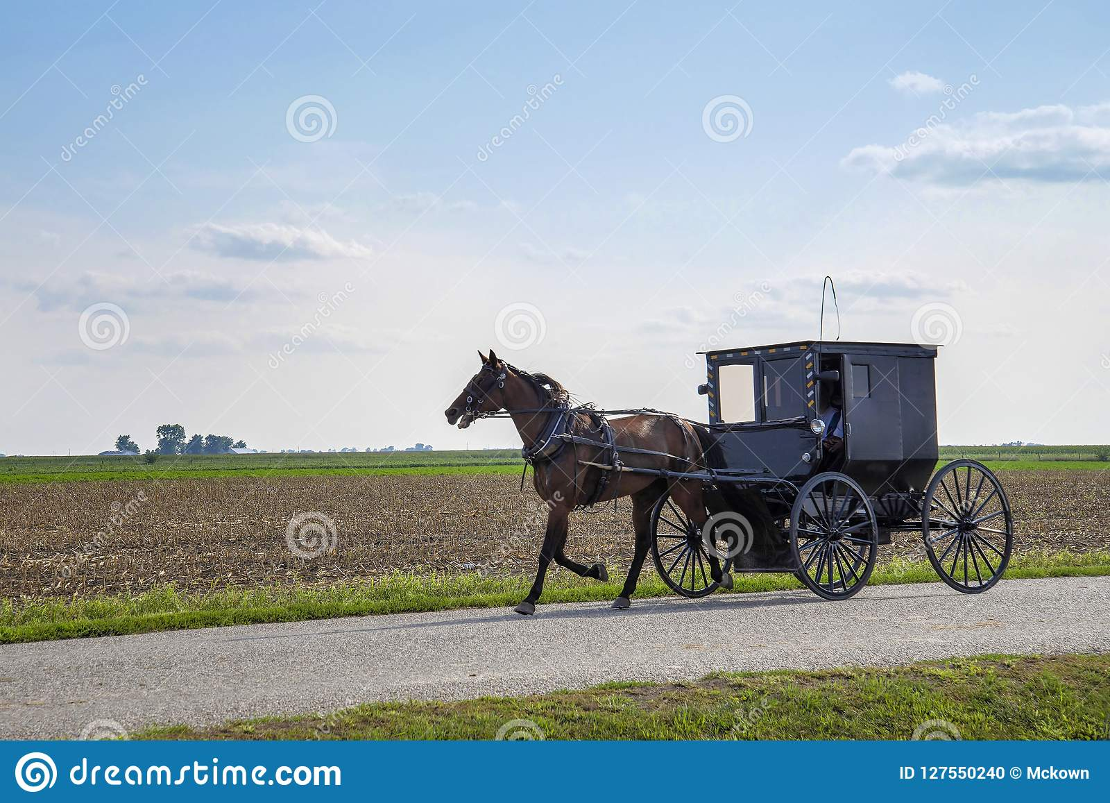 门诺派中的严紧派的多虫的马