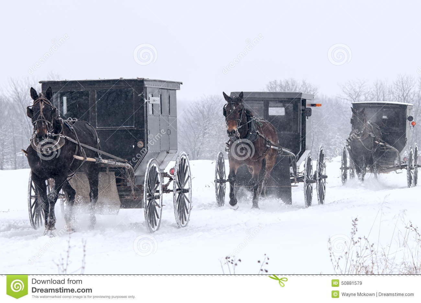 门诺派中的严紧派车水马龙,雪,风暴