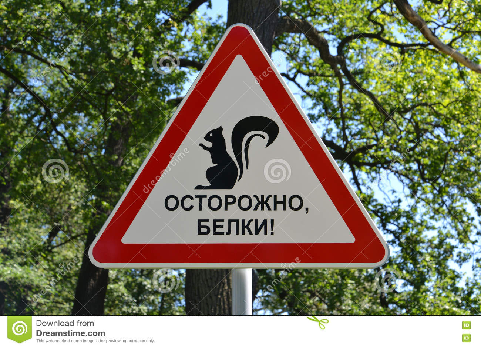 防备标志仔细,灰鼠!在公园