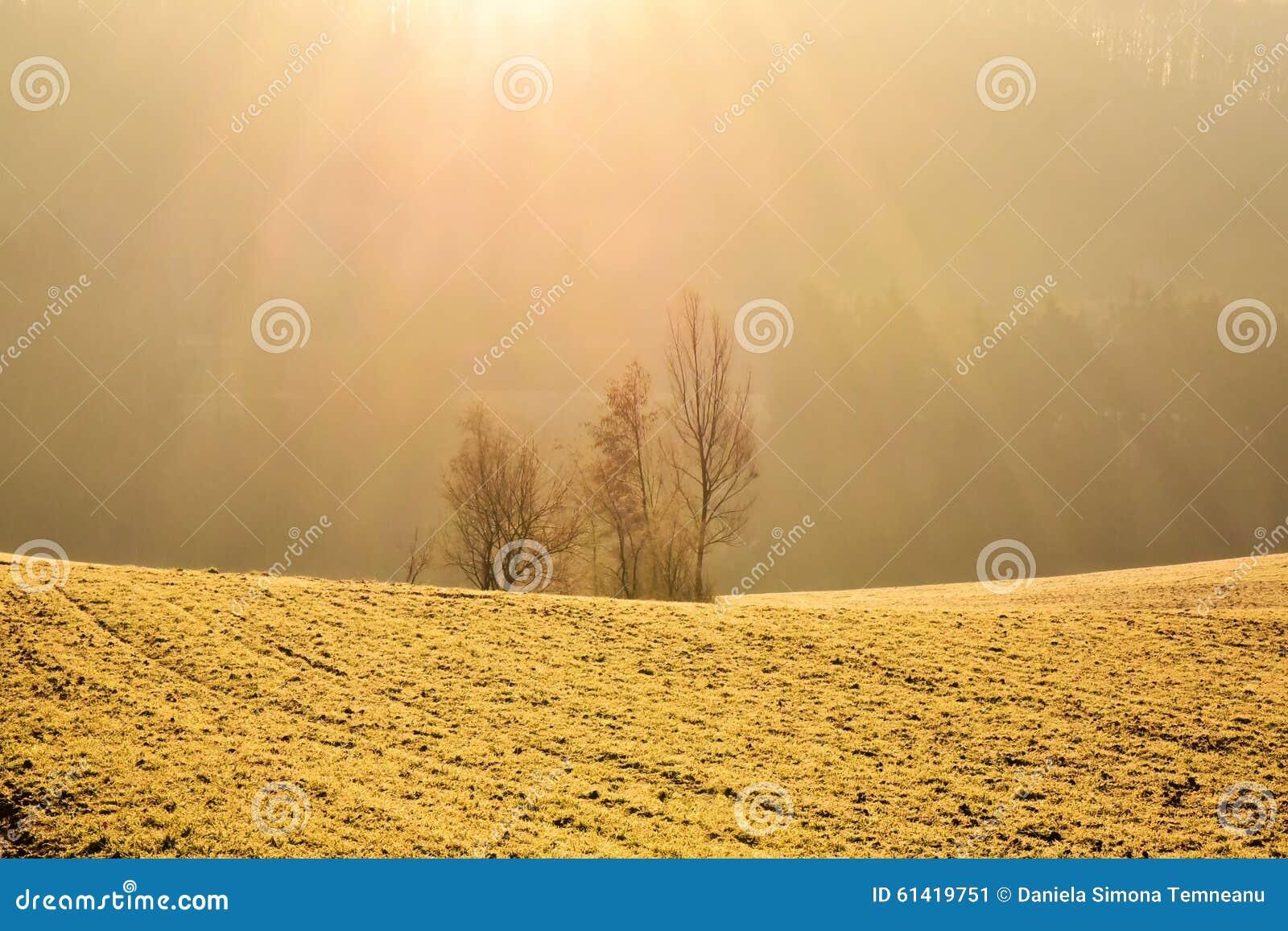 阳光温暖的草甸