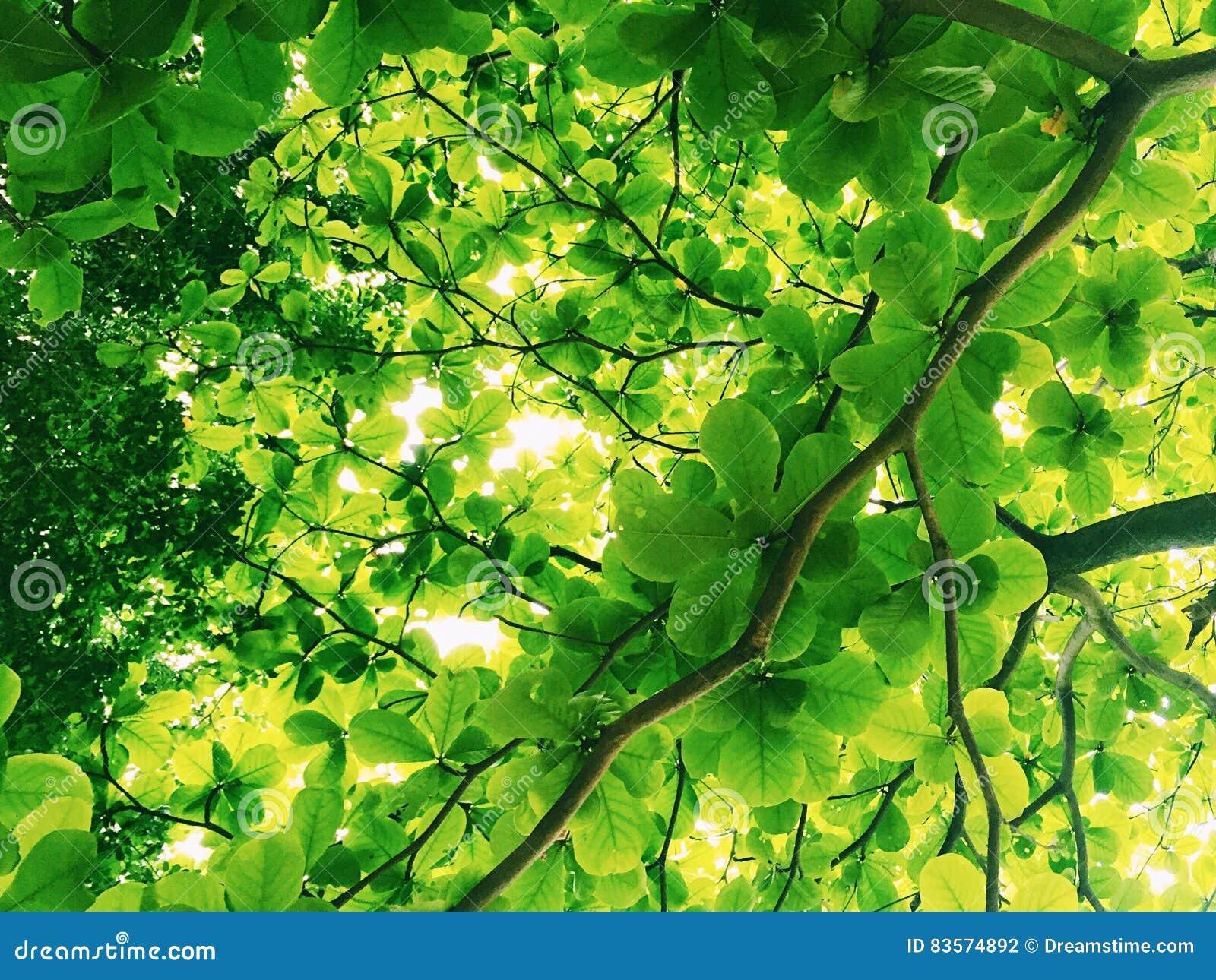 阳光通过结构树